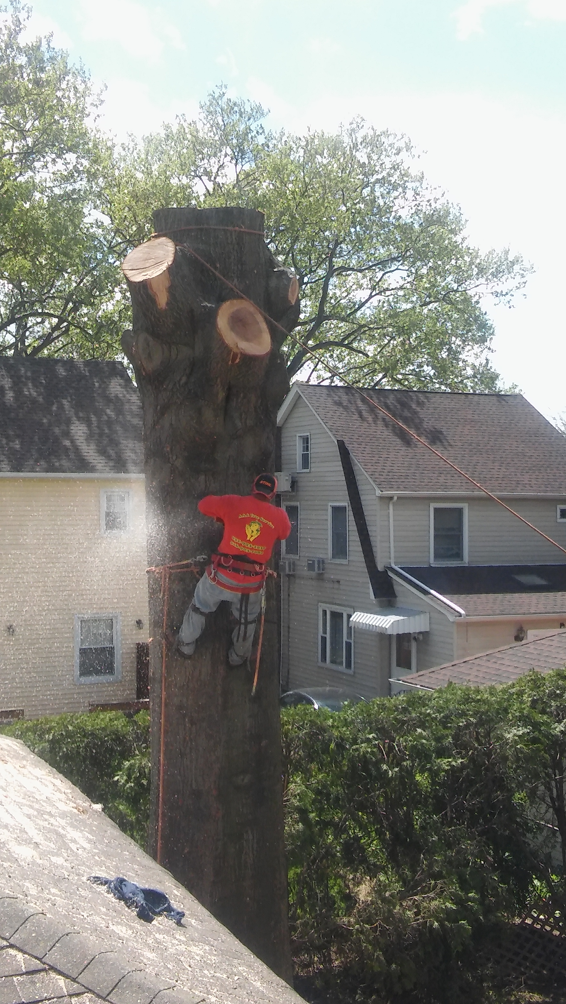 We care any Tree cutting And Trees Relocation service