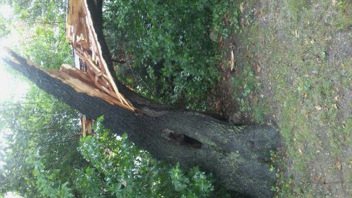 tree cutting service estimate