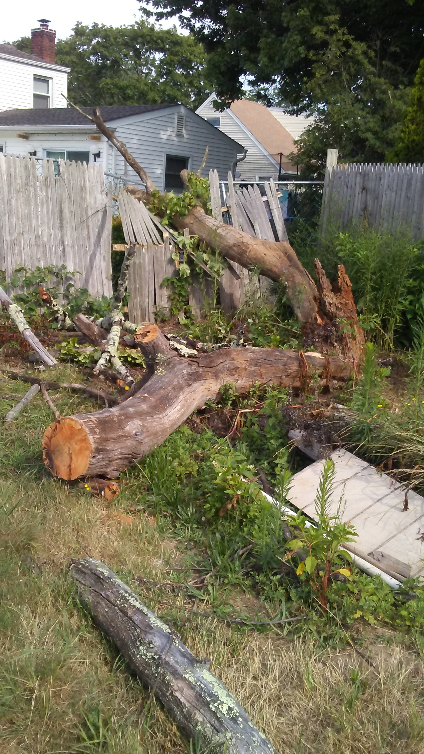 Charming FALLEN TREE REMOVAL: $75 $150