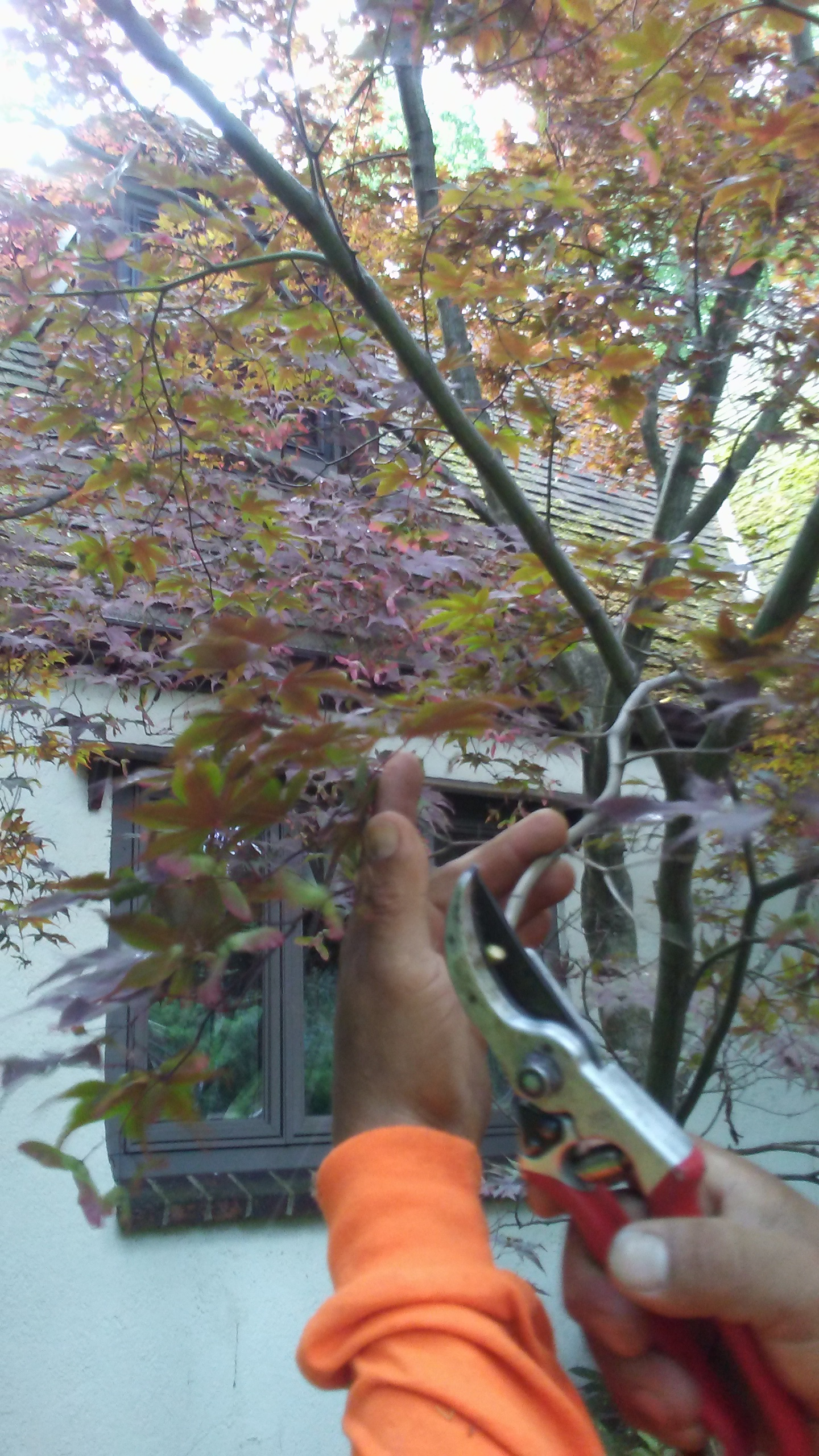 Pruning Trees Tips