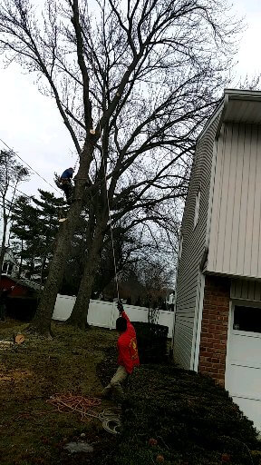 how trim or removal trees near to power lines nassau county tree removal services long island. Black Bedroom Furniture Sets. Home Design Ideas