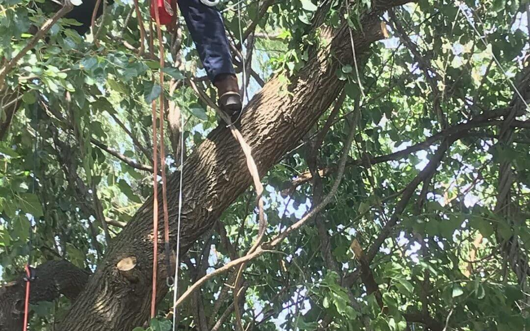 Tree Trimming cost average on Tree trimming