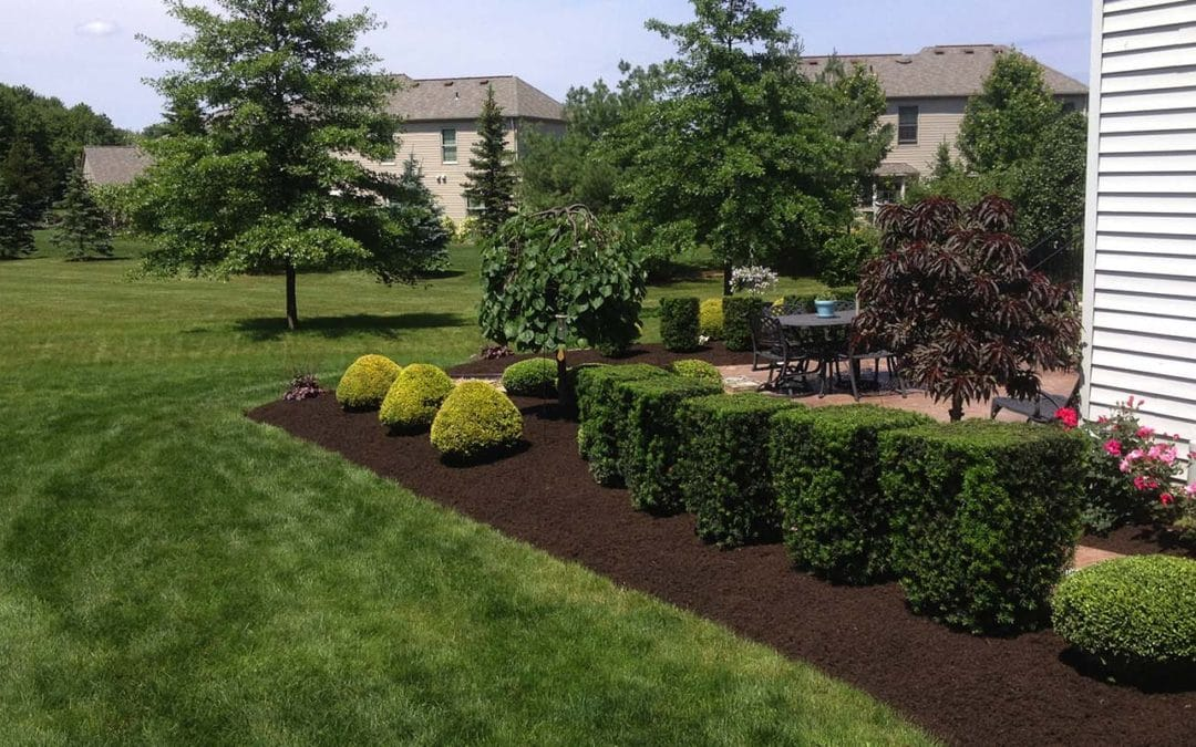 Search Results Web results Shrub Removal & Trimming - Over Growing- evergreens