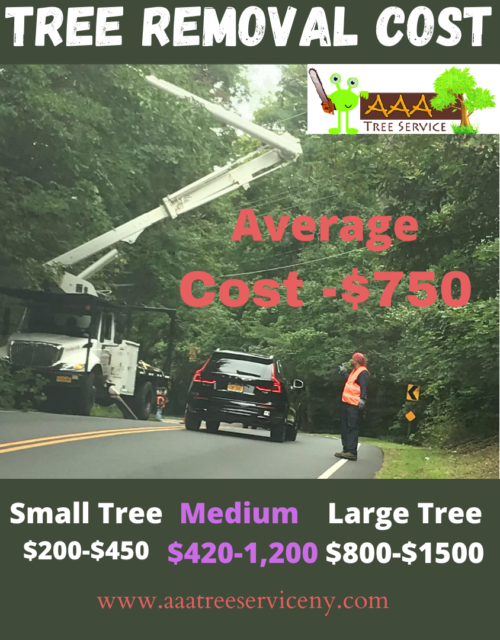 How Much Does cost Trimming Cost & Pruning near | Average ...